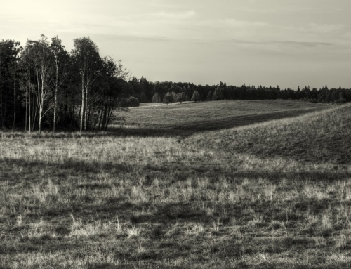 Field in Black & White
