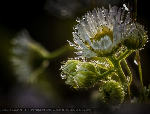 Macro photo and 2 new HD wallpapers