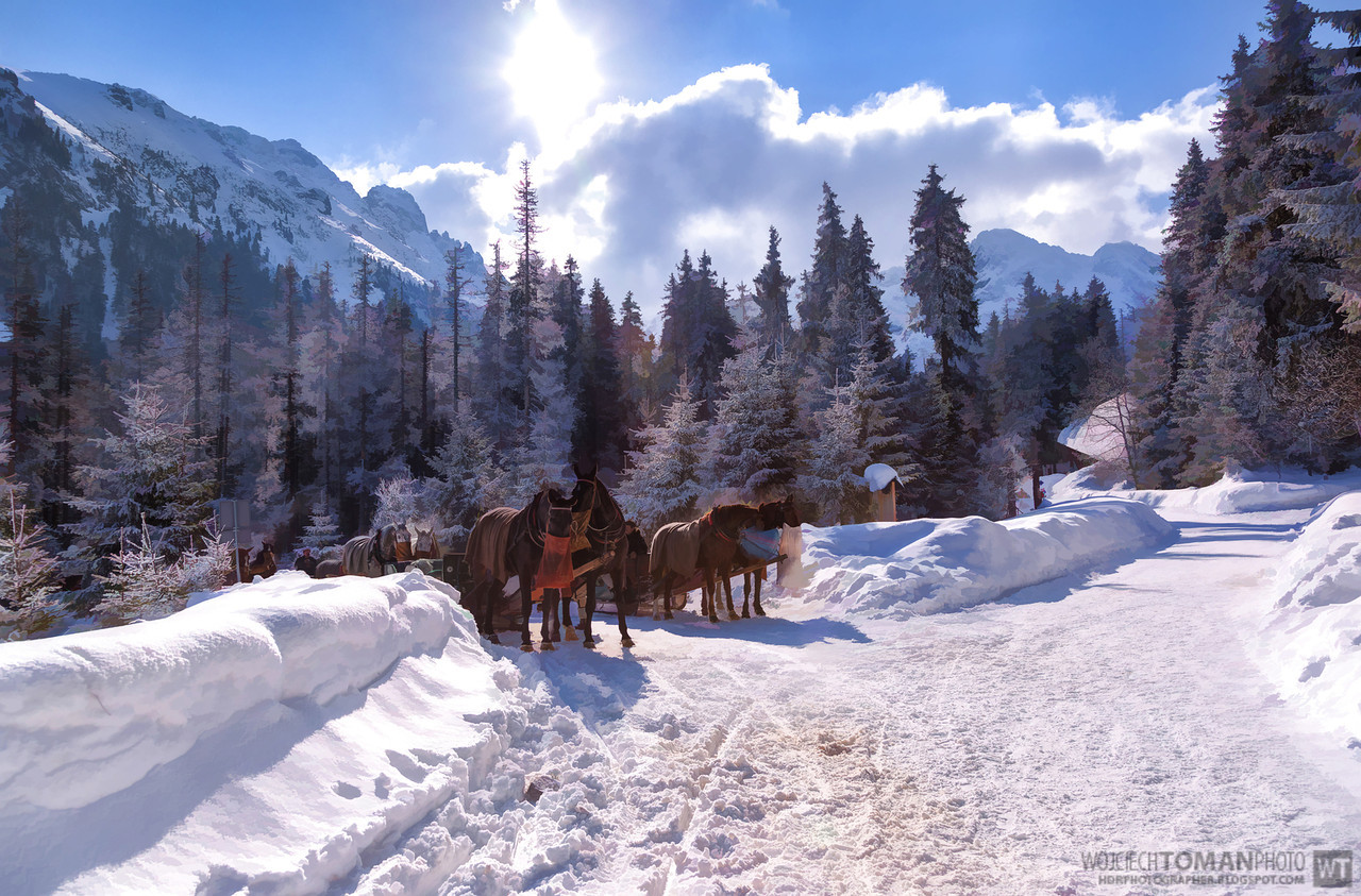 Resting horses on the way to Morskie Oko