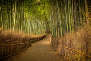 bamboo_after