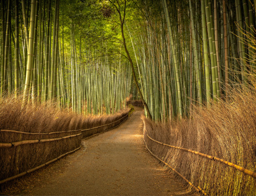 Post-processing step by step: Bamboo Forest