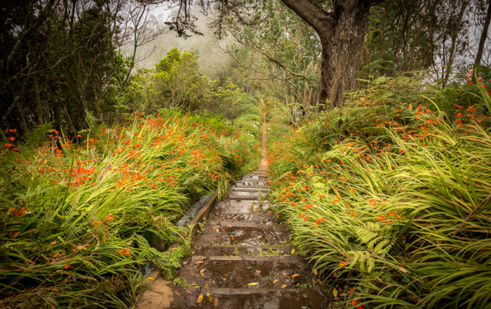 Best photo spots in Madeira