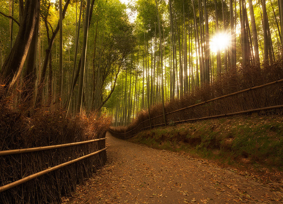 Morning Light in the Bamboo Grove