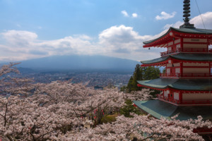 Sakura near Mt. Fuji (hiding in the clouds)
